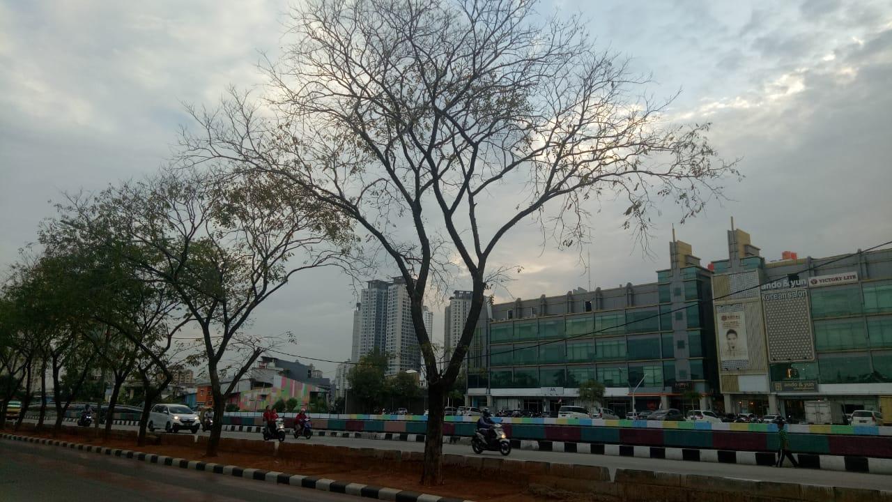 Beginilah Kondisi Pohon Pelindung Yang Ditanam Di Jalan Danau Sunter Barat