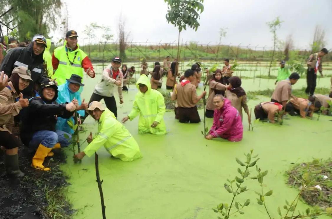 Wujud Kecintaan Bahari, Ribuan Anggota Pramuka Jakarta Utara Tanam Bibit Mangrove Dan Bersih-Bersih Pantai