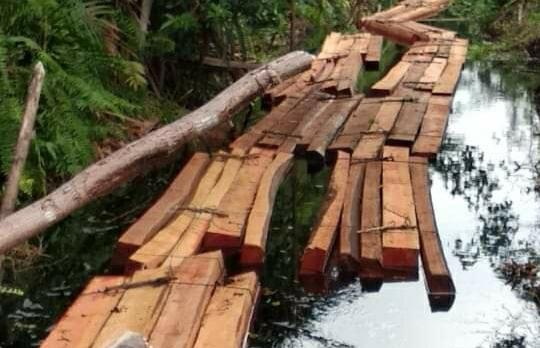 Pemilik 'Menghilang', Ratusan Batang Balak Tim Diamankan Polres Kepulauan Meranti