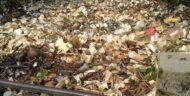 Warga Harapkan DLH Atasi Penumpukan Sampah Di Kali Kumpa